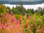 Loch Allen (Leitrim)