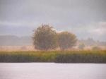 Rain Impressionism